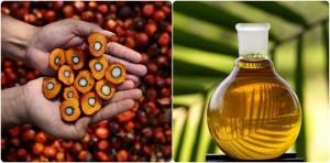 La verdad sobre el aceite de palma. bolsas ecologicas ebags publicidad