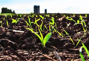 Biofertilizantes a partir de fuentes renovables bolsas ecologicas ebags publicidad